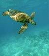 Plastpåsar, mindre plast att hamna i våra hav