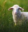 djurskydd, ull, dun, läder, spårbarhet